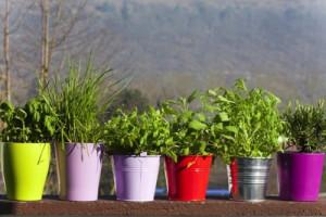 Cómo adelgazar con hierbas naturales